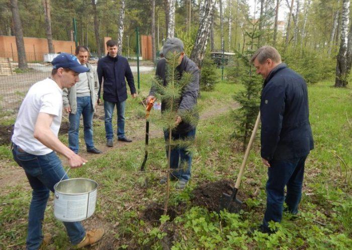 На сайте обкома КПРФ сообщается, что недавно мэр Анатолий Локоть в парке «Сосновый бор» участвовал в посадке пихтовой аллеи