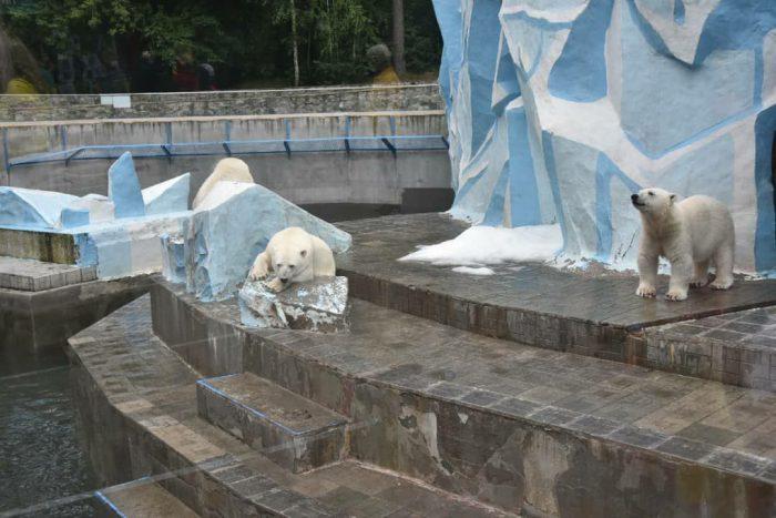 Белые медведи в Новосибирском зоопарке имени Ростислава Александровича Шило